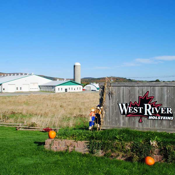 West River Holsteins (2008)